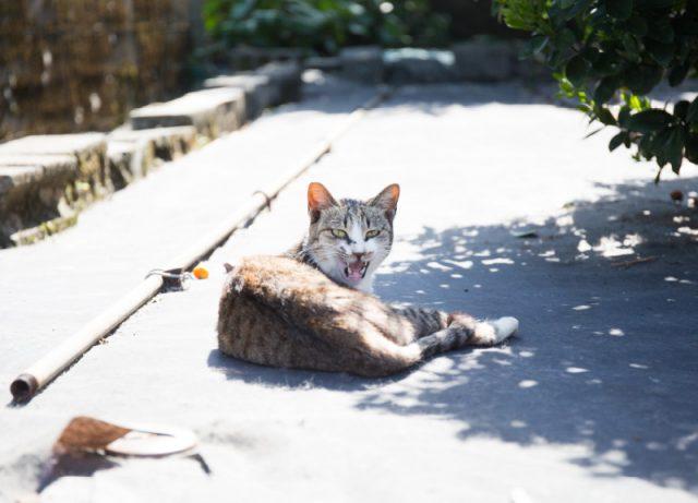 しまなび 猫